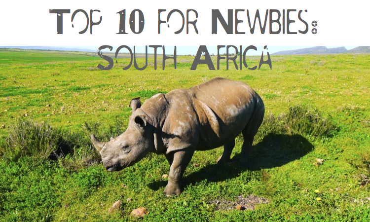 Newbies Top 10 SA | Milk & Cookies Travel Bites
