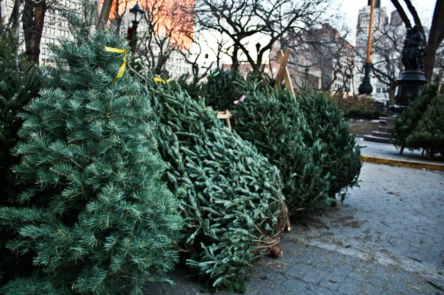 Christmas Trees in NYC and London  | Milk and Cookies -8